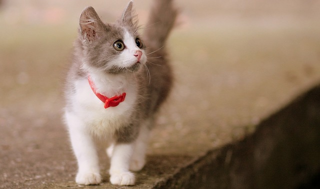 cat-1440464_640