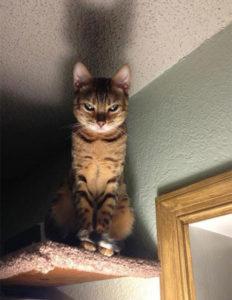 gatos_malvados_1