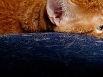 pelos-gatos-quitar-art